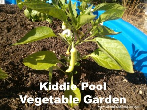Do It Yourself Kiddie Pool Vegetable Garden: Hot Peppers, Tomatoes, Zucchini + More!