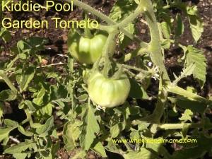 Kiddie-Pool Garden Update – One Month In