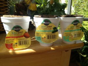 Gro-Ables from Miracle Gro: Grow your own Herbs & Veggies quickly!
