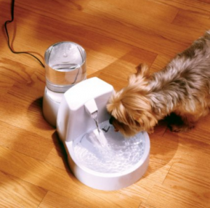 Drinkwell Original Pet Fountain now $29.99 (reg. $49.99)!!!